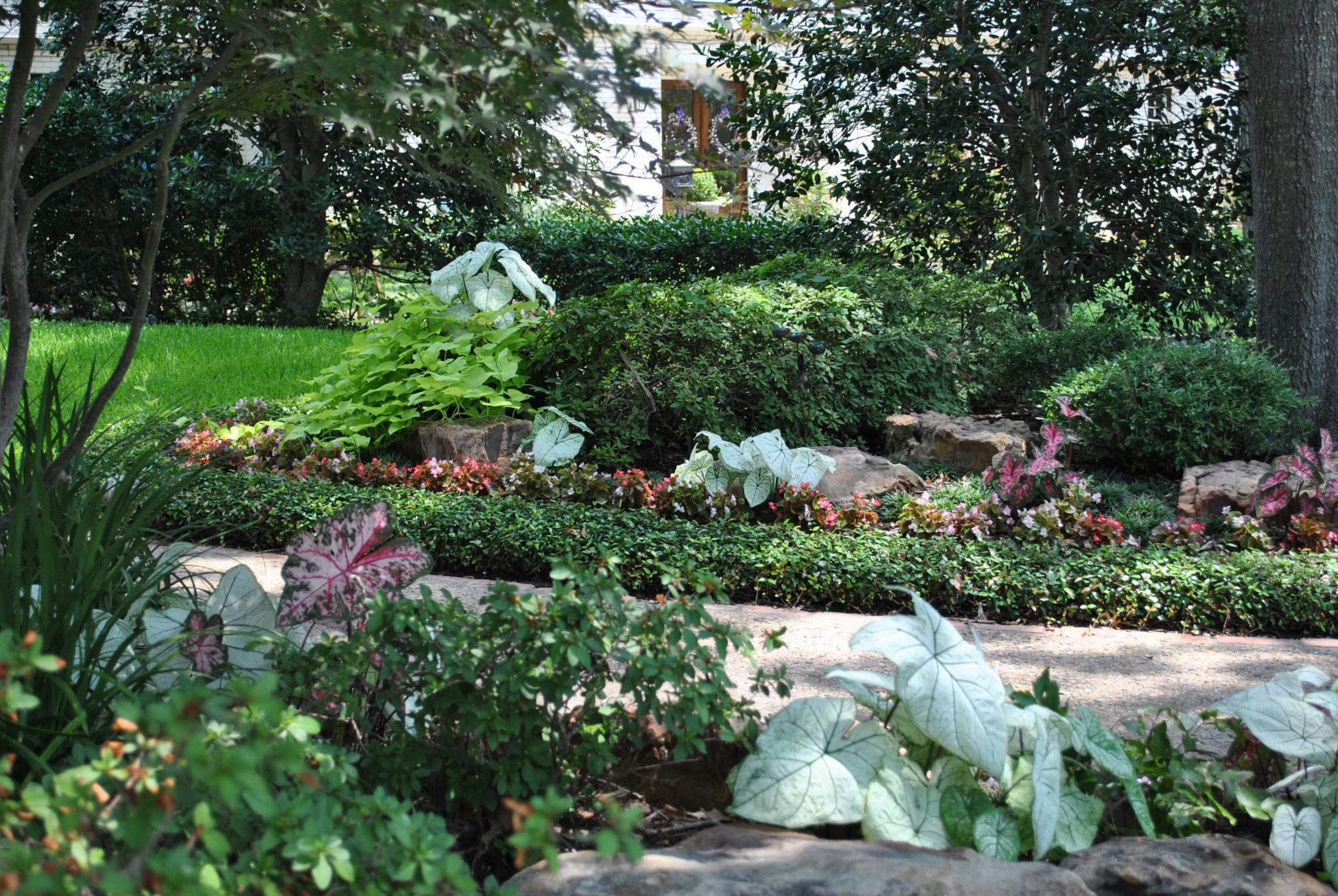 Dallas Landscapers - Impact Landscapes LLC - 972-849-6443
