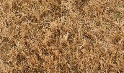 Lawn Care Tips to Combat Texas Drought Damage - Impact Landscapes LLC - 972-849-6443